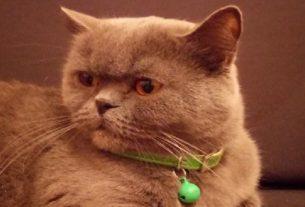 Gracie, la chatte mise en vente à Rostov-sur-le-Don, en Russie