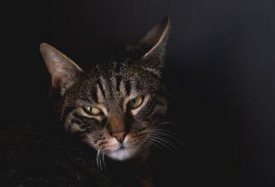 Un chat dans l'ombre.